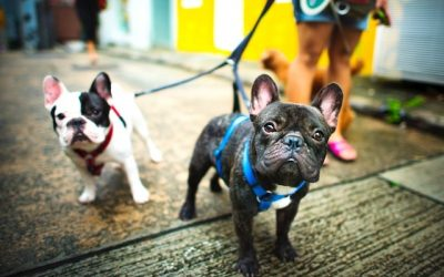 Top 5 Reasons You Should Hire A Dog Walker