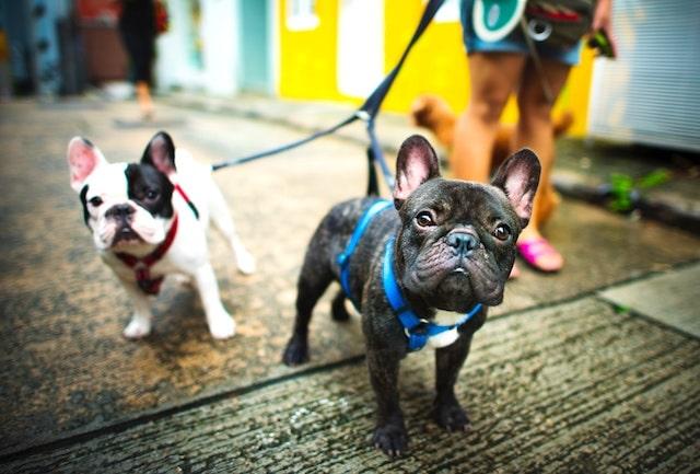 Top 5 Reasons You Should Hire A Dog Walker