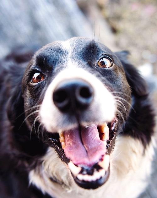 Professional Dog Walking and Pet Sitting in Fuquay-Varina, NC