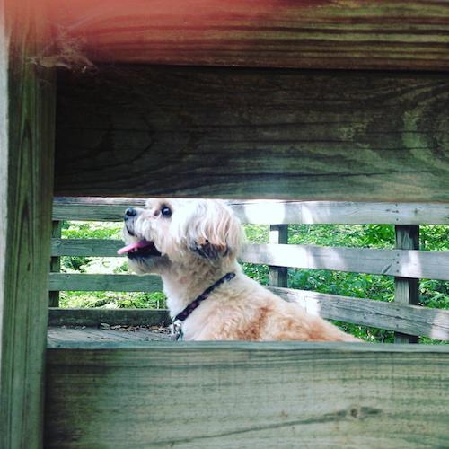 dog friendly cary hemlock bluffs nature park