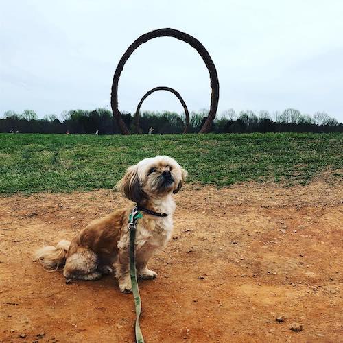 dog friendly raleigh art museum
