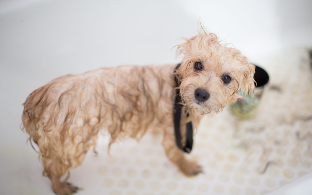The Top 5 Best Pet Grooming Places Available in Apex, NC