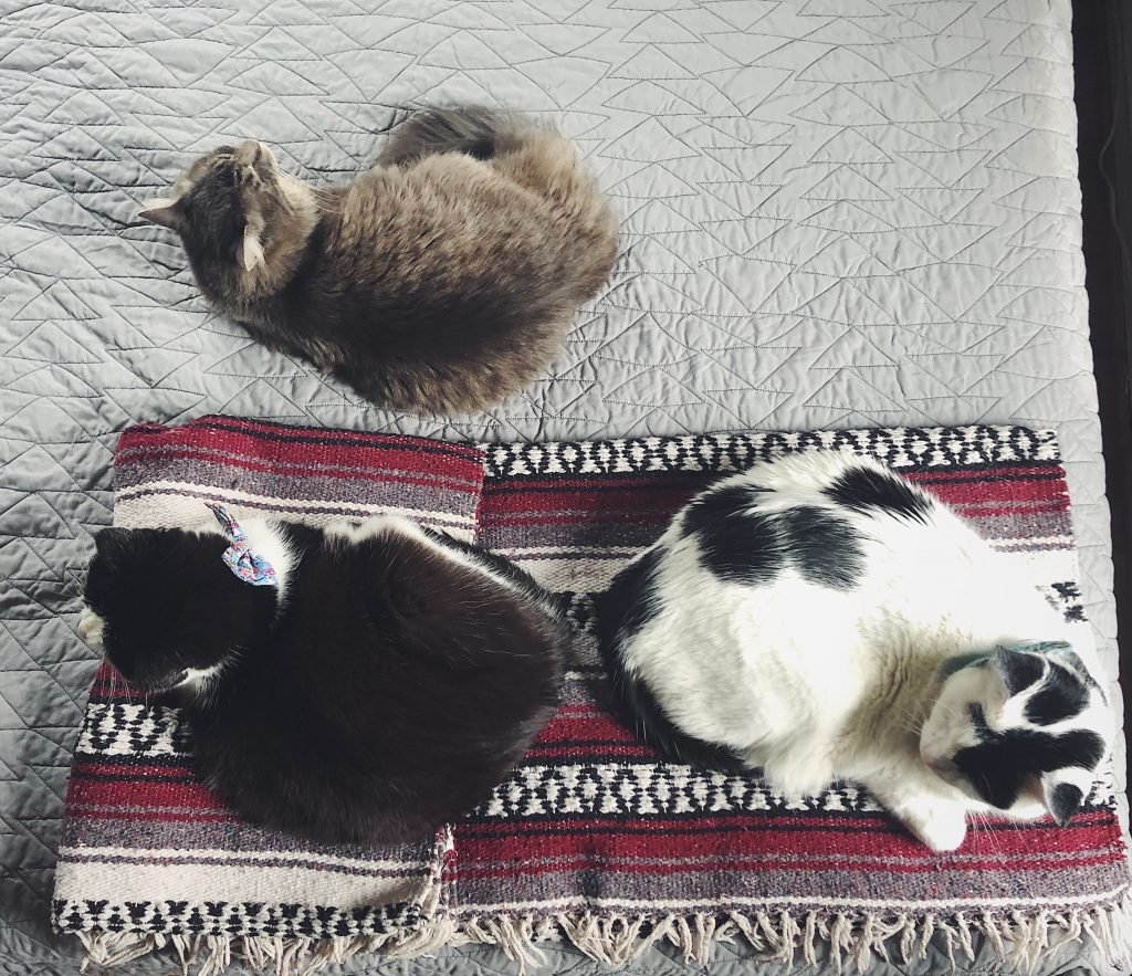 three cats asleep laying on a bed.