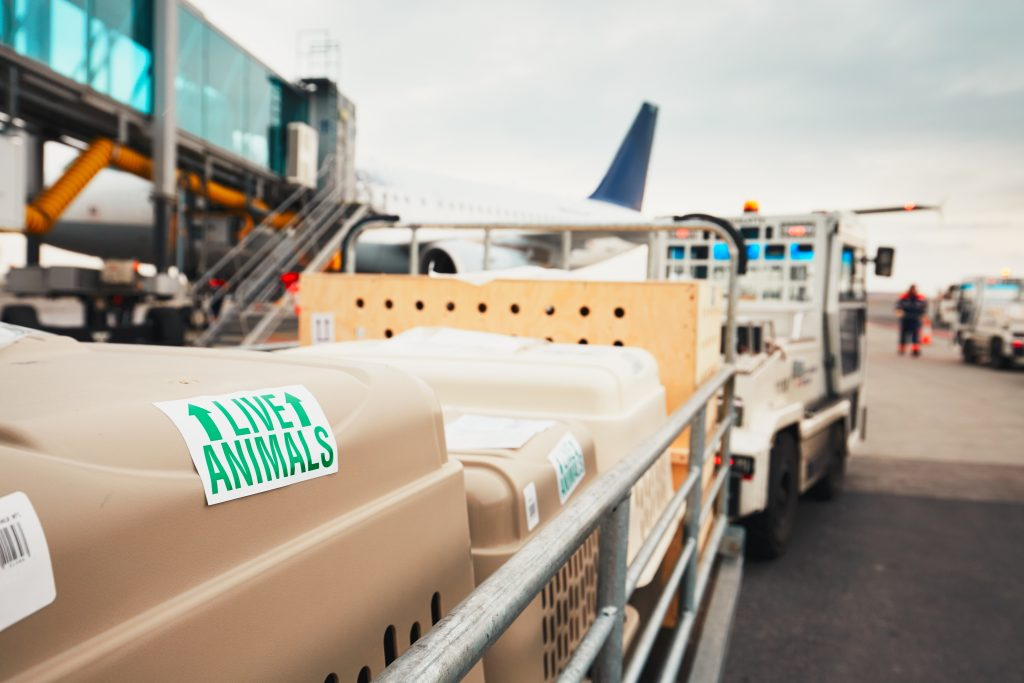 crates with live animals being hauled to the plane for flight.