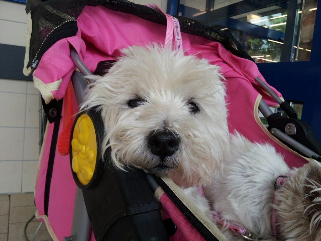 dog sitting in pet stroller.