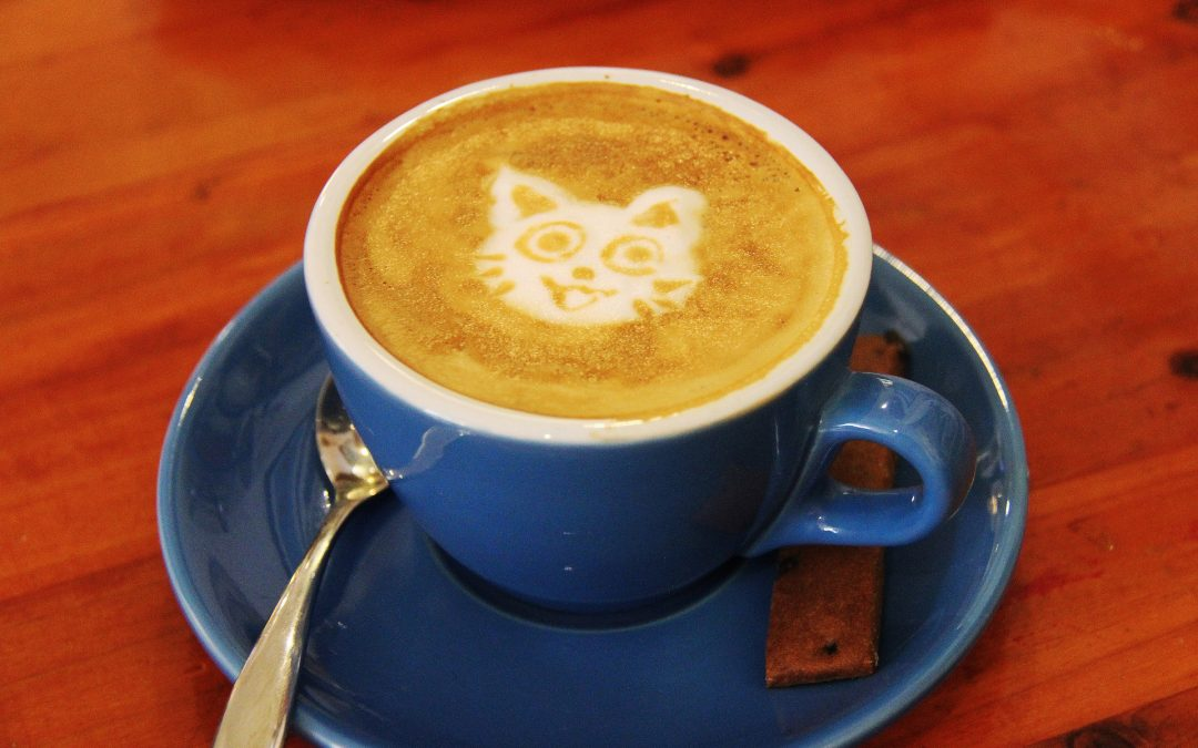 Purr Cup Cafe: The First Cat Cafe Brewing in Raleigh, NC