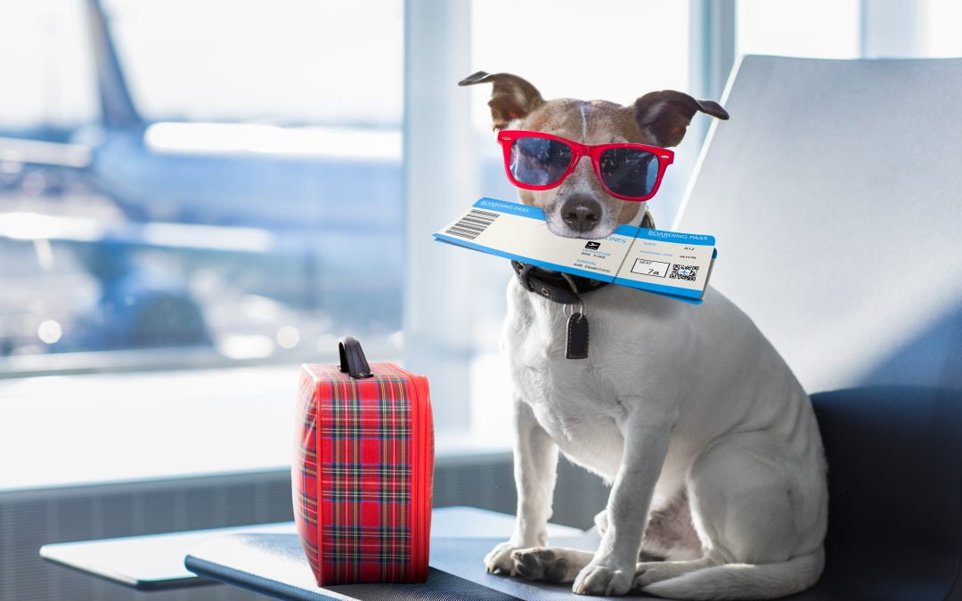 RDU Airport: Everything You Need to Know When Flying With Your Pet