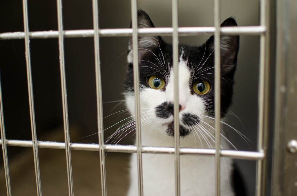 Cat in a cage at an animal shelter.