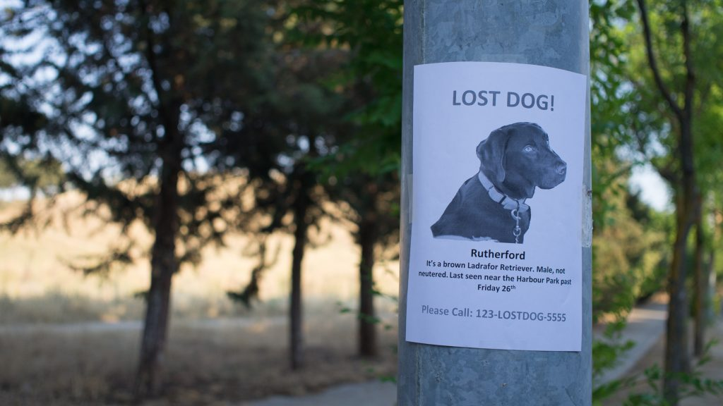 Flyer of missing dog on a pole of a wooded area.